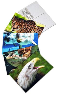 Go Wild Plantable Postcards