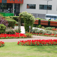 Our beautiful garden in Ashford