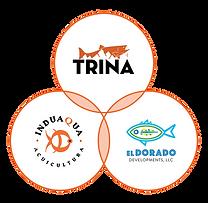 TRINA 3 circle ver 1.0 31-Mar-2020.png