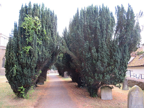 AVENUE OF TREES.jpg