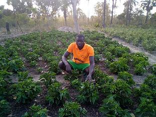 recolte tomates.jpg