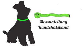 Hund für ein Halsband vermessen