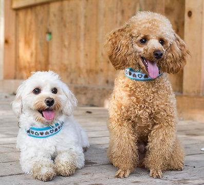 Pfotenprunk Hunde Halsbänder Alpenliebe Selbernähen