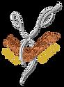 HairElite - logo Trasparente.png