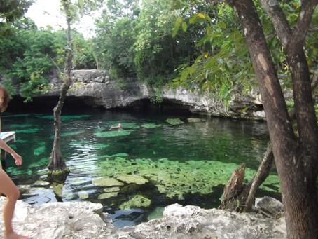 Cenote Life