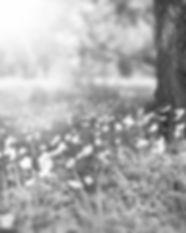 spring-276014_1280_edited.jpg