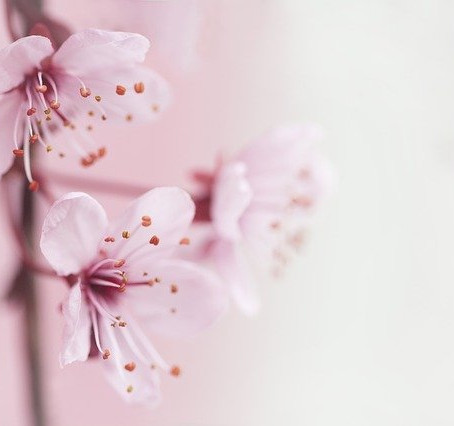 März: Herzöffnung, Frühling und Balance