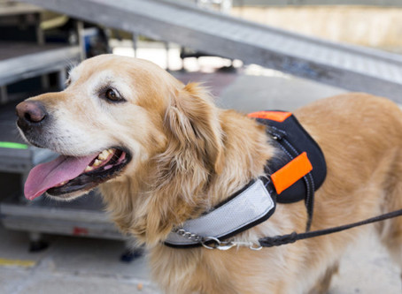 Win: New Flyer Available About Service Animals