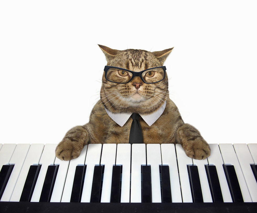 The cute cat in glasses plays the piano.