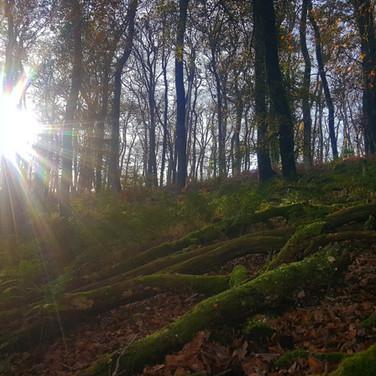 Woodland Management Tarr Steps