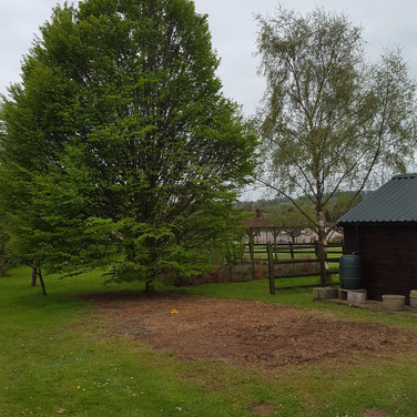 Tree Removal Taunton