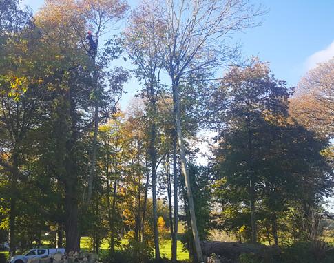 Woodland Management in Goathurst