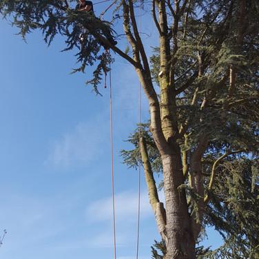 Tree Dismantle Clevedon