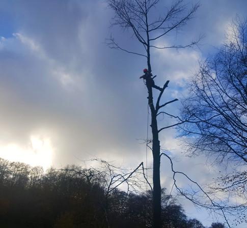 Tree dismantle in Exmoor National Park