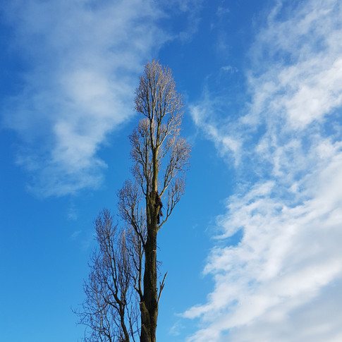 Tree Dismantle Wiveliscombe