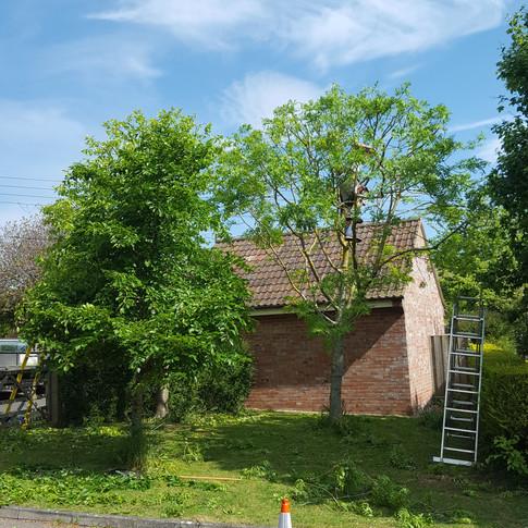 Tree reductions Somerset