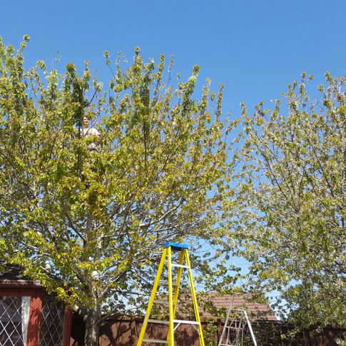Tree Reductions Weston-Super-Mare