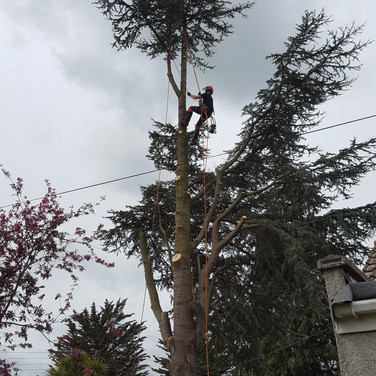 Tree Dismantle in Clevedon