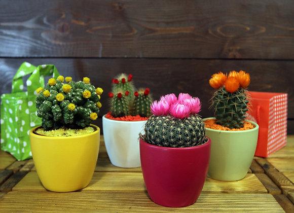 Cactus Dek