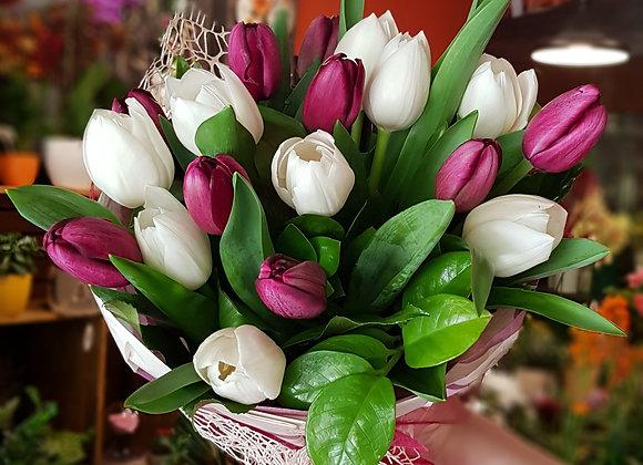 Tulipane mix