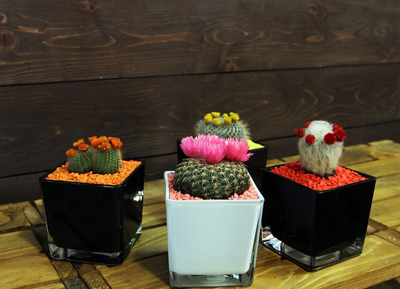 Cactus ICE