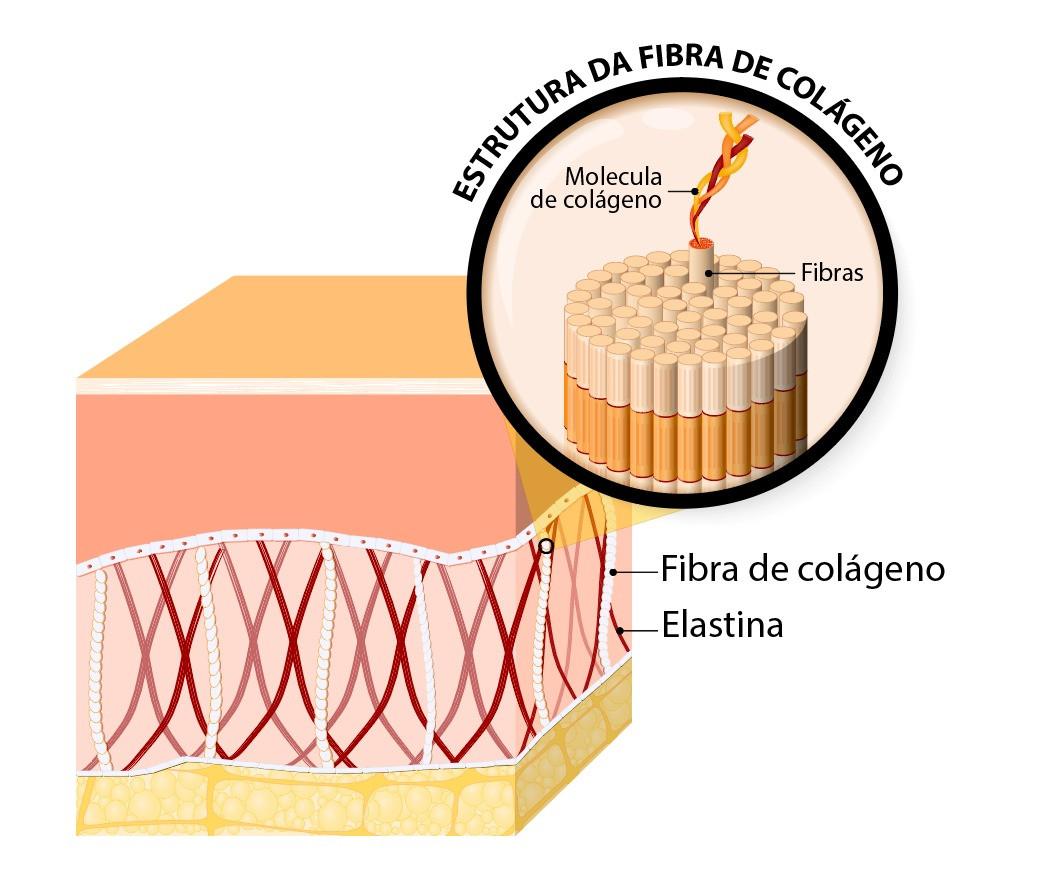 Estrutura do Colageno  - Dra. Larissa Oliveira - Microagulhamento 02
