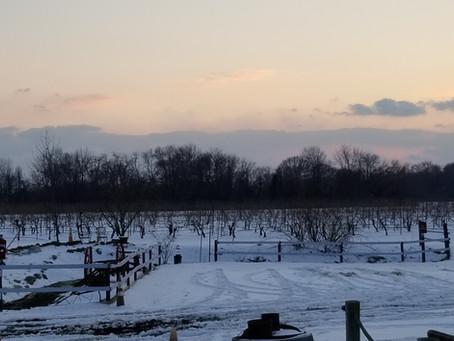 Salem Oak Vineyards