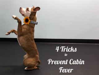 4 Tricks to Prevent Cabin Fever