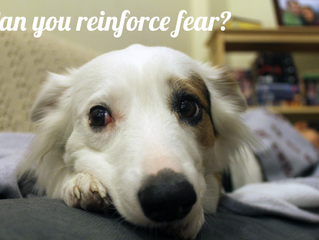 "On ""Reinforcing"" Fear"