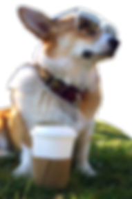 cool-teen-dog.png