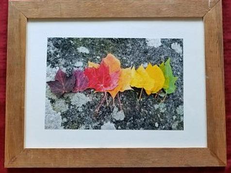 Framed Leaf Rainbow Print