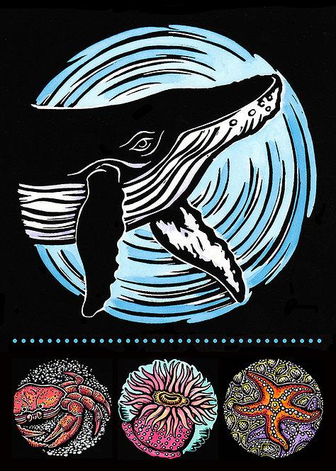 Sea Life: Humpback