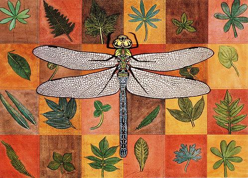 Dragonfly | enclosures