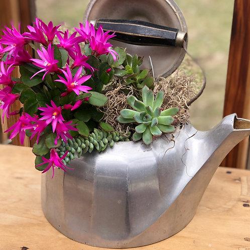 Cactus Garden with Antique Tea Pot