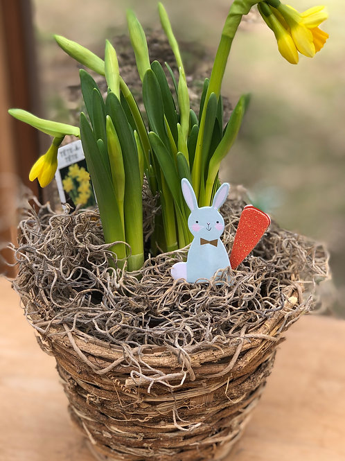 Easter Bunny Tete-A-Tete Narcissus