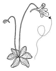 Butterwort Banner Logo photo - 1.jpg