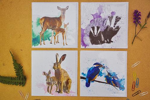 Wildlife 6 - SALE Pack of 4