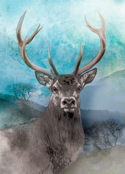 Stag on a Misty Morning at Cardinham