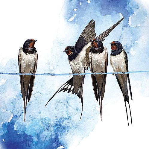 Garden Birds Greetings Card Set of 8
