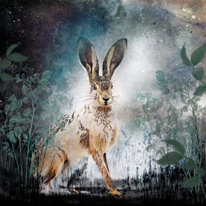 Spirit of a Hare at Dusk