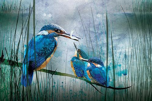 Kingfishers - ORIGINAL