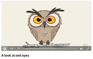 A look at owl eyes