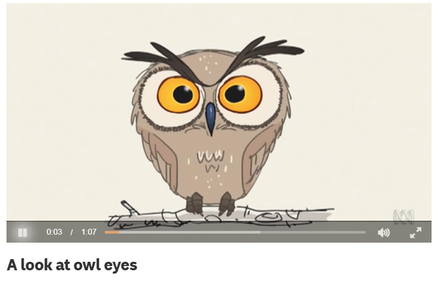 A look at owl eyes