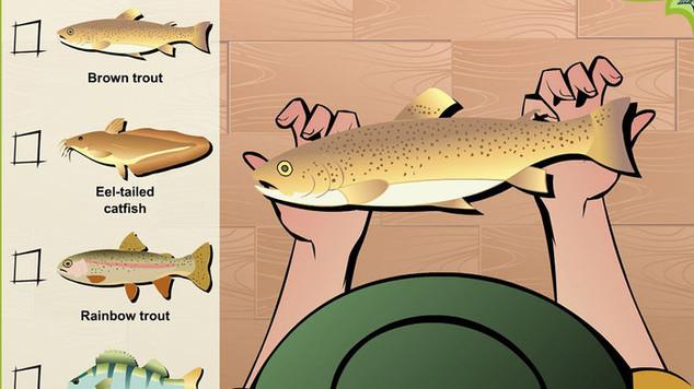 Fishing in WA: write an article