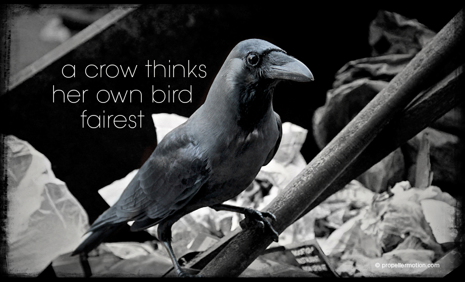 Colombo Crow - Photography
