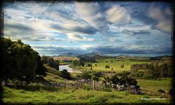 Pukehuia - Photography