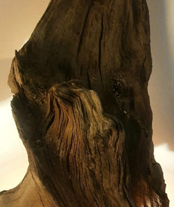 Tree Root Faces