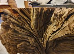 Oak Tree Root