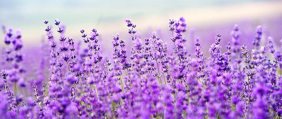 lavenderscent.jpg