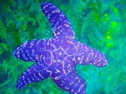 star fish jpg.jpg